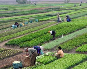 De la 1 august 2016 se aplica cota redusa de TVA pentru sectorul agricol