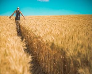 Fonduri 100% nerambursabile pentru tinerii fermieri. Depunerea cererilor se poate opri si inainte de termenul limita